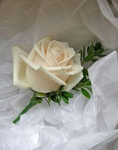 Vendela Rose and myrtle - buttonhole for mike, Jon, dad, oli, Allan - sharp green or softer green?