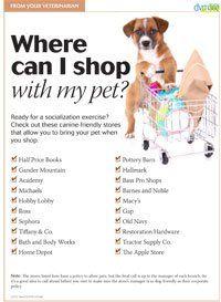 Handout: Safe places to socialize puppies