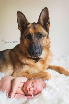 newborn baby photographers Vancouver Wa: brother love » Sarah Costa Photography.. baby and German Shepard