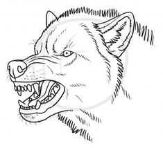 how to draw an angry wolf step 10