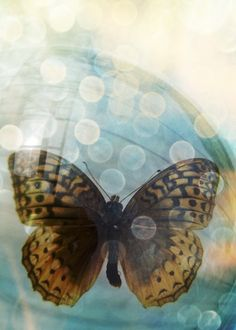 Butterfly Photography - Yellow and Black Butterfly - Turquoise - Light Orbs - Bokeh - Colorful - Fine Art 5x7 Print - Insect - Nature