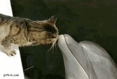 Katten zouden in theorie zelfs dolfijnen kunnen verstaan