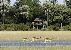 #Luxury Lodge #Okavango Delta #Wildlife #safari