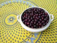 Two recipes: Wild Damson Gin and Sloe Gin recipes