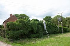 Dragon Topiary: John Brooker of Norfolk spent 13 years trimming a 150' hedge into a massive dragon complete with flowing tail and wings. Image credit Damien McFadden. via athisiscolossal #Hedge #Topiary #Dragon