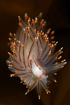 ˚Nudibranch   Exquisite Display - sho buz  www.shopowerreviews.com