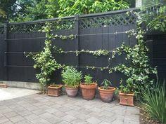 Espalar Wire Anchor – Espalier made easy Wall Climbing Plants, Climbing Roses, Lawn And Garden, Garden Paths, Herb Garden, Back Gardens, Outdoor Gardens, Vertical Gardens, Trellis For Sale