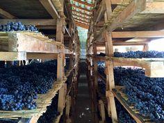 Am Sonntagmorgen 05.03.2017 werden wir nach dem Frühstück aus-checken und wir fahren zum Weingut La Torre in Bianzone. Einige der Weine bei La Torre sind aus biologischem Anbau. Hier gibt es im Stahltank, im Fass und in Ton-Amphoren ausgebaute Weine. Auf dem Programm stehen die Besichtigung des Weinkellers und eine Degustation der Weine. Bei der Degustation werden wir einige Weine Amphore vs. Holzfass im direkten Vergleich verkosten. Fruit, Gourmet, Wine Cellars, Organic Gardening, Clay