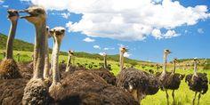 999 € -- Südafrika: Mietwagen-Rundreise mit Flug & Hotels