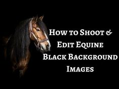 How to Shoot & Edit Equine Black Background Photos - FYI FRIDAY - Sophie Callahan Blog