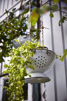 Quick tips for creative gardening. With handles for hanging and holes to let out water, GEMAK colander serves just as well for growing plants.