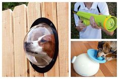 A Bolt of Blue - Cool Pet Accessories #dog #activities #doglife