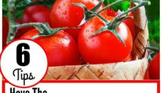 6 Tips To Grow The First Ripe Tomato In Your Town!