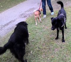 12/09/2015 - Torino con Olga e Peja