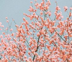Flower aesthetic, plant wallpaper и pink aesthetic. Spring Aesthetic, Peach Aesthetic, Nature Aesthetic, Flower Aesthetic, Flowers Wallpaper, Plant Wallpaper, Aesthetic Backgrounds, Aesthetic Wallpapers, Nature Architecture