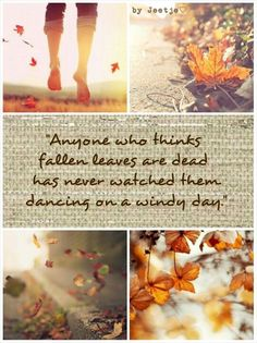 """Autumn Quote """"Anyone who thinks fallen leaves are dead has never watched them dancing on a windy day. Autumn Day, Hello Autumn, Autumn Leaves, Fallen Leaves, Seasons Of The Year, Best Seasons, Collages, Happy Fall Y'all, Windy Day"""