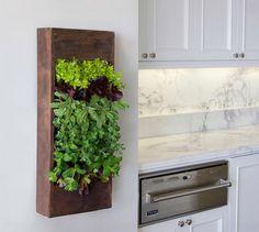 Huerto vertical en la cocina - 5 ideas para hacer de tu cocina un lugar más acogedor