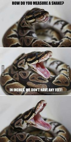Funny pictures about Snake Humor. Oh, and cool pics about Snake Humor. Also, Snake Humor photos. Cute Funny Animals, Funny Cute, Hilarious, Serpent Animal, Cute Snake, Snake Funny, Snake Meme, Cute Reptiles, Funny Lizards