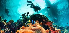 Spectacular Dive Sites You Have to See to Believe 12 Best Places to Scuba Dive in Florida - Key Largo, Miami, Fort Lauderdale Florida Keys, Places To Travel, Places To See, Travel Destinations, Underwater Sea, Underwater Photos, Best Scuba Diving, Surfer, Disneyland