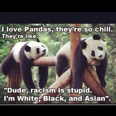 Made me chuckle Family guy: So are pandas the interracial babies of the bear world?