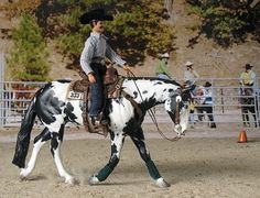 Reining - Model reining horse and rider