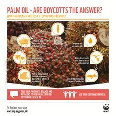 Guilt-free movie snacks: why demand sustainable palm oil? Palm Oil Benefits, Rainforest Destruction, Guilt Free, Health Remedies, Sustainability, Snacks, Shit Happens, Species Extinction, Food