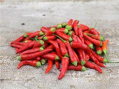 Thai Red Chili Pepper | Baker Creek Heirloom Seed Co