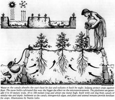 Lost crops of the Incas, note how they have made a raised be.- Lost crops of the Incas, note how they have made a raised bed in a pond type structure are using the water to create a warmer micro-climate for the crops - Hydroponic Gardening, Vegetable Gardening, Veggie Gardens, Organic Gardening, Container Gardening, Permaculture Design, Forest Garden, Aquaponics System, Aquaponics Fish