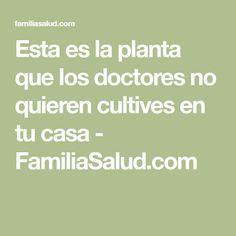 Esta es la planta que los doctores no quieren cultives en tu casa - FamiliaSalud.com