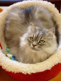マロンの物語 feat.猫カフェ Cats-猫ベッドのクラフトくん