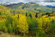 View of autumn foliage from McClure Pass near Marble and Redstone, Colorado.
