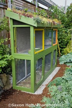 Rabbit hutch with 'green' roof of hardy succulents. Love the contrasting colors of the painted hutch doors. Jennifer Carlson's sustainable city farm garden, Seattle, Washington. Saxon Holt Photography/PhotoBotanic Garden Library