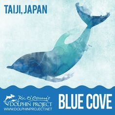 Blue cove! Thank goodness!