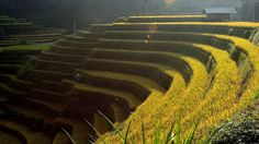 Top Ideal Places To See Amazing Rice Terraced In Northern Vietnam
