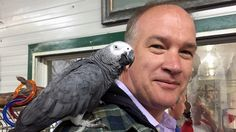 There's been a 'huge' public response to plight of hundreds of exotic birds at a Vancouver Island parrot refuge that's run out of money, says a volunteer helping with the rescue process: