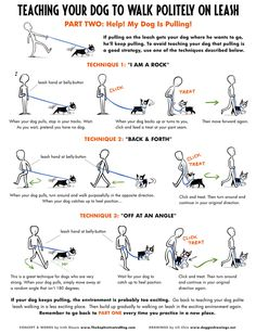 How to teach loose leash walking.