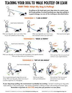 How to teach loose leash walking.