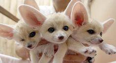 So cute!! @Flavia Cardoso kinda looks like a combo of bella and sadie :)