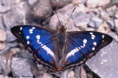 Bund Naturschutz in Bayern e.V.: Schmetterlinge