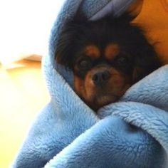 We love blankets!