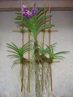mounted orchids | ... orchid on instead of the plastic basket the orchid was sold in… Not