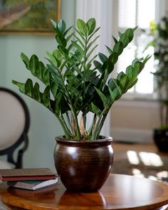 Easy House Plants For Indoor Decor Ideas 42 image is part of 60 Easy House Plants for Indoor Decor Ideas that You Must Have gallery, you can read and see another amazing image 60 Easy House Plants for Indoor Decor Ideas that You Must Have on website