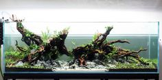 An aquascape suitable for dwarf cichlids, midwater shoalers, benthic schooling fish, and Loricaridae catfish. Truly an aquascape well done!