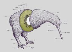 Anatomy of a Kiwi Bird