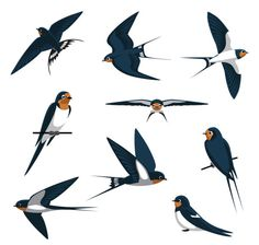 Choose from 60 top Swallow Bird stock illustrations from iStock. Find high-quality royalty-free vector images that you won't find anywhere else. Barn Swallow, Swallow Bird, Bird Illustration, Graphic Design Illustration, Free Vector Graphics, Free Vector Art, Bird Drawings, Cartoon Drawings, Animal Body Parts