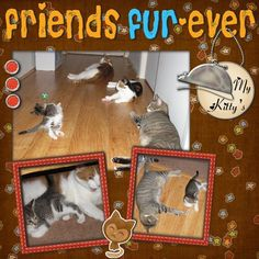 2 page scrapbook layouts cats - Google Search