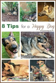 For many people, dogs are considered family members. These 8 tips for a happy dog will have your furry friend happy, healthy and a great companion for years to come.  #PedigreeGives #ad
