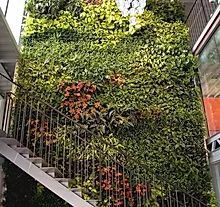 Artificial Green Walls | artificial-forest Artificial Grass Mat, Artificial Green Wall, Artificial Hedges, Artificial Plants, Stair Walls, Boxwood Hedge, Small Plants, Plant Design, Lush Green