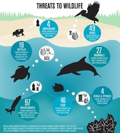 Understanding the Treats to Animals and Wildlife  The infographic poster presents information on the same issue stating some of the incidences in brief. It states how various birds, mammals, amphibians, reptiles, fishes and invertebrates are threatened in their natural habitat due to numerous issues.