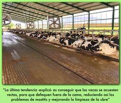 """""""La leche es la ausencia de estrés en la vaca"""", """"Por cada hora a mayores de descanso la vacas produce hasta 1,7 litros de leche más"""". Bajo estas premisas Gordon Jones, consultor estadounidense, en rendimiento lechero en diversas ganaderías tanto de Estados Unidos como a nivel internacional, desgranó este jueves las claves de la comodidad"""